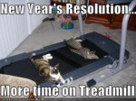 Cats- More time on treadmill
